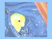 kaart funny birds blauw jpeg