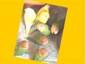kaart funny birds geel jpeg-001