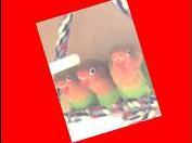 kaart funny birds oranje jpeg-002